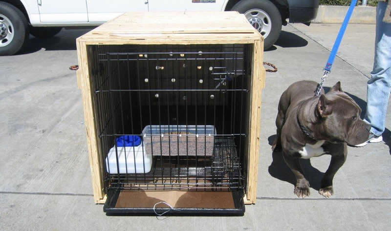 Custom Modified Pet Shipping Crates Pet Air Carrier Llc